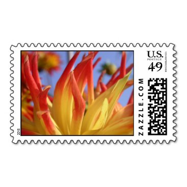Yellow and red blue sky dahlia postage stamp